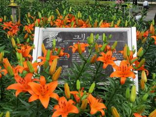 千種公園 百合の花園