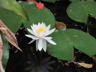 六所神社 池