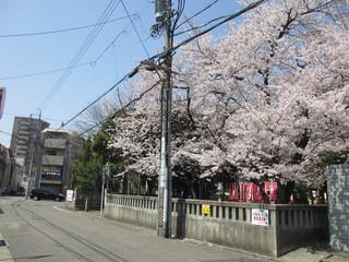 2013桜02